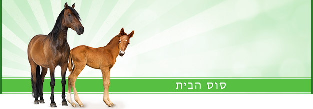 באנר סוסים