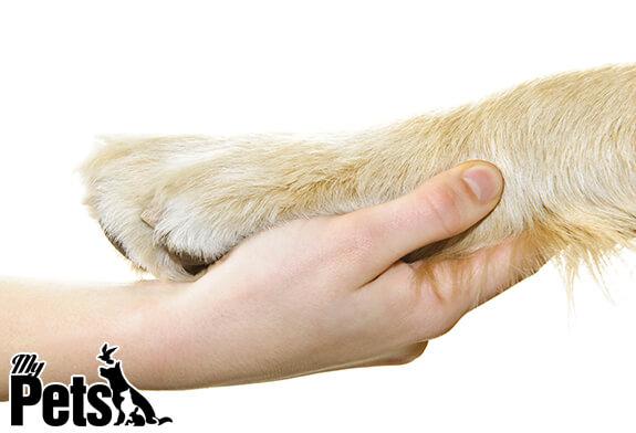 קשר הכלב והאדם