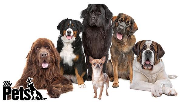 גזעי כלבים שונים