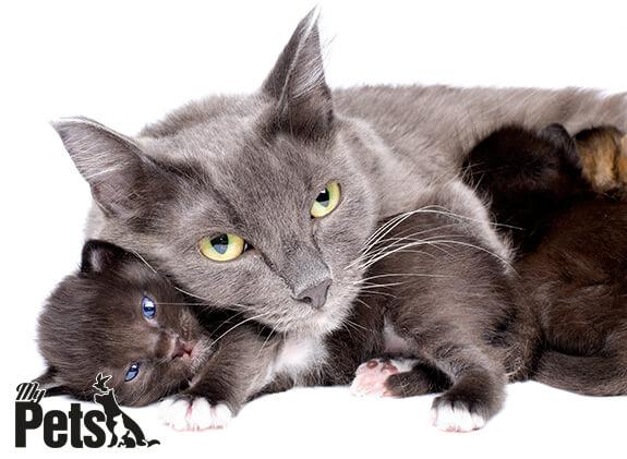 חתולה וצאצאיה
