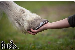 קשר הסוס והאדם
