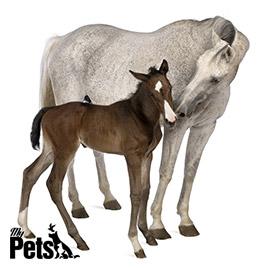 סוסה וסייח