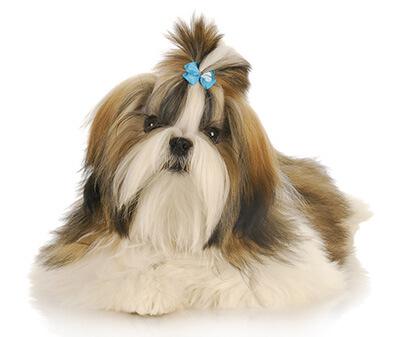 הוראות חדשות My Pets - שיצו (גזע כלבים) SQ-11